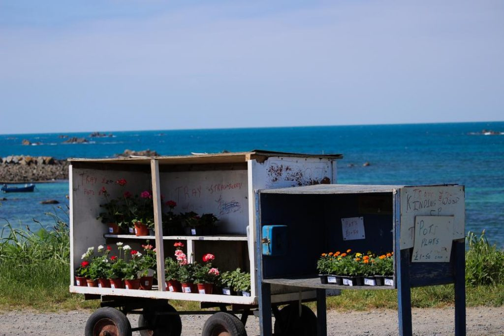 A small trailer with plants for sale on the side of the road. The sea in Port Grat bay can be seen behind